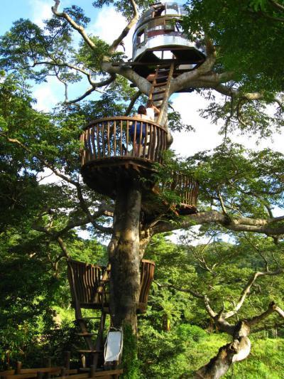 Casetta sull'albero sulla spiaggia della roccia - Giappone