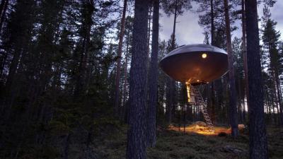 UFO sugli alberi - Svezia